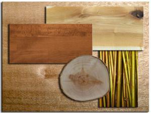 Породы древесины. Ива. Текстура.