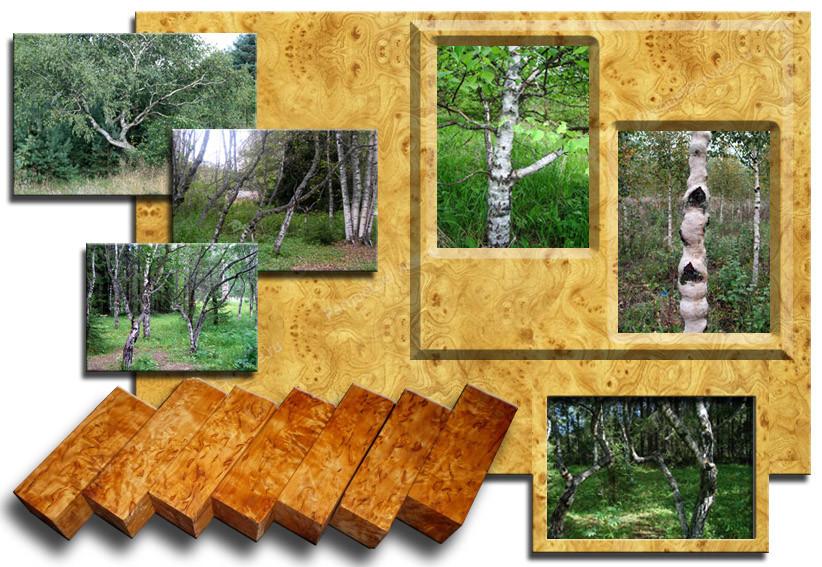 Породы древесины. Карельская береза
