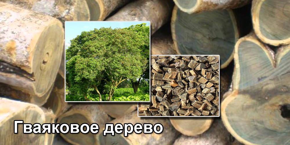 Гваяковое дерево (Бакаутовое дерево)