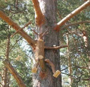 Столярная мастерская Здравствуй, дерево