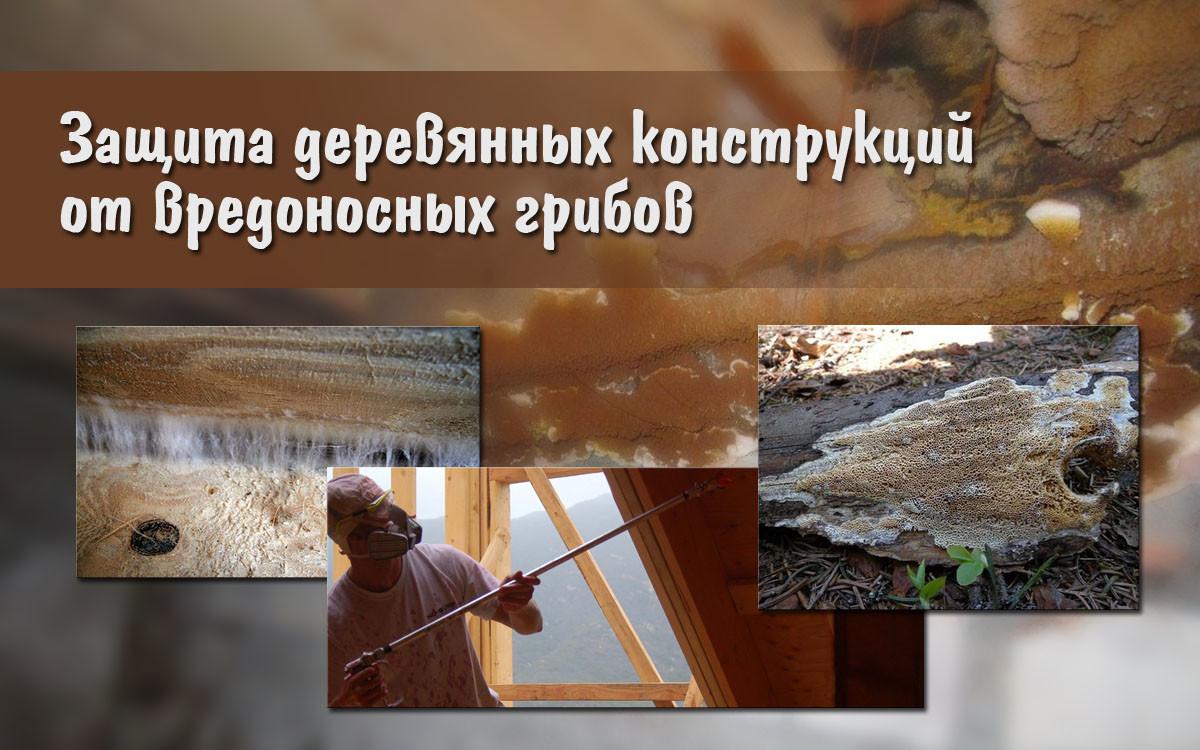 Защита деревянных конструкций от вредоносных грибов